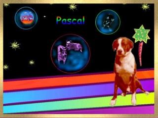 PascalRainbowklein.jpg