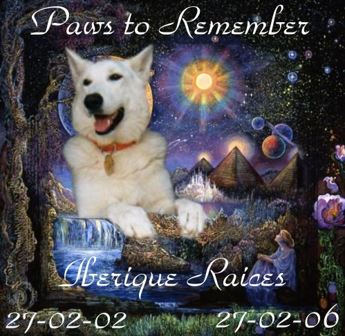 Paws%20to%20Remember.jpg